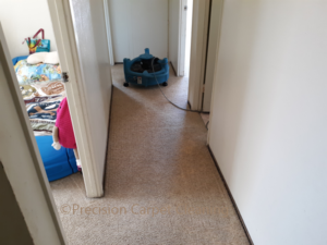 Green Carpet Cleaning In Scripps Ranch San Diego Ca