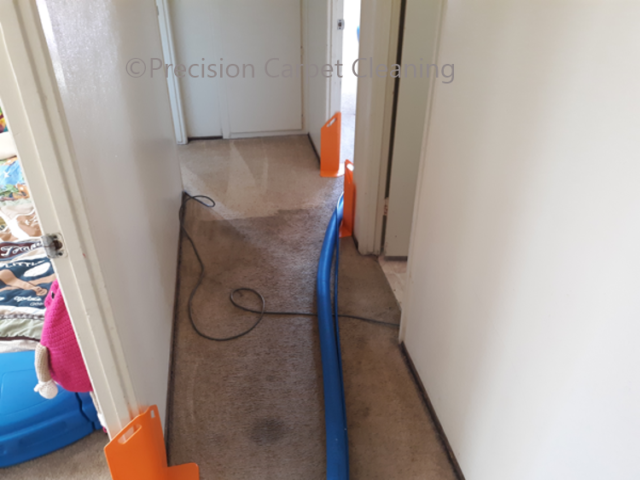 Green Carpet Cleaning Scripps Ranch 92131