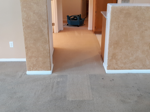 Truckmounted Steam Carpet Cleaning San Diego