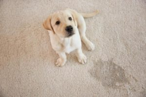 Pet Odor Removal San Diego