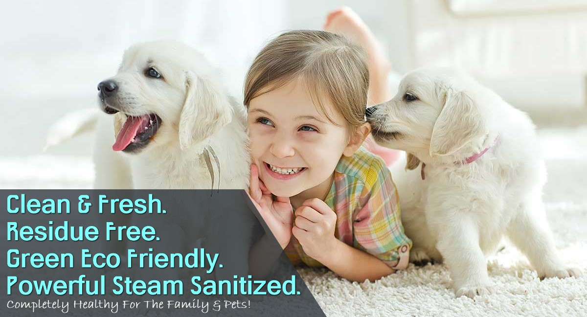 Pet Urine Odor Treatment